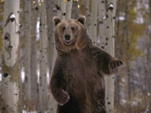 medved-i-ego-tajiga