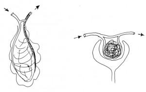 embrionalnye-shunty