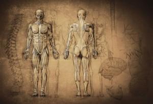 anatomija-2