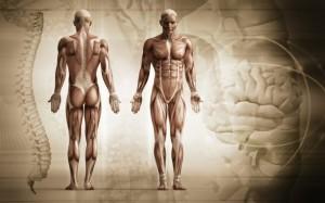 anatomija-3