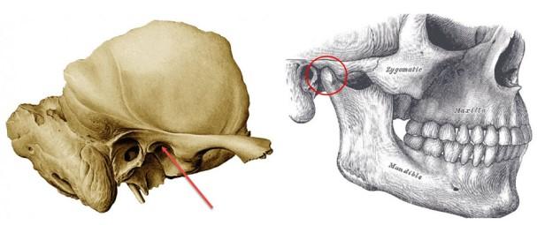 fossa-mandibularis